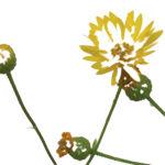 Soul Dementia Flower image